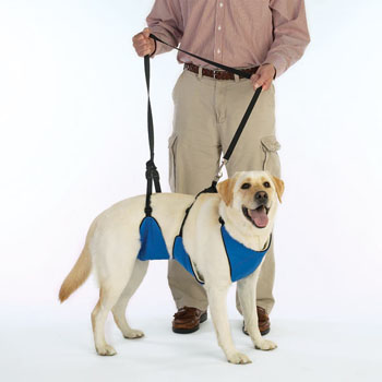body harness for dogs
