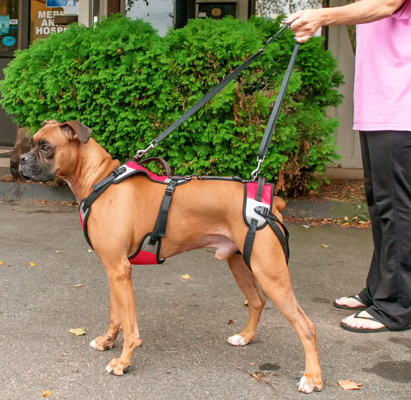 Car Maintenance Checklist >> T.U.S.H.: The Ultimate Support Harness for Dogs - TopDogHealth.com
