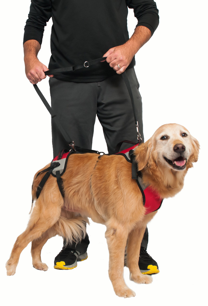 T.U.S.H.: The Ultimate Support Harness for Dogs ...