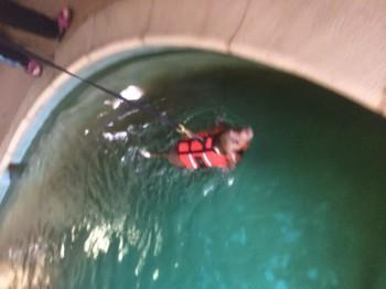 King Swimming