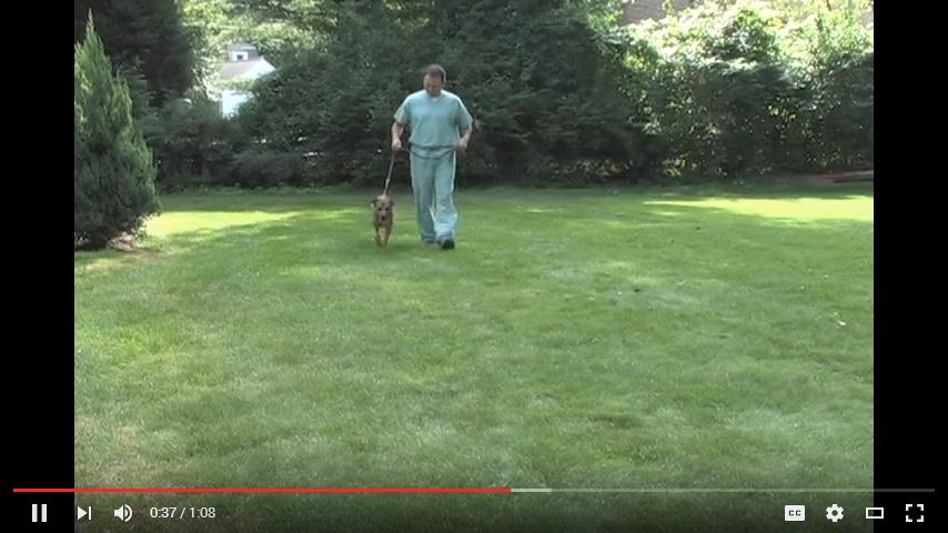 Video: Walk-Jog-Run Excercise