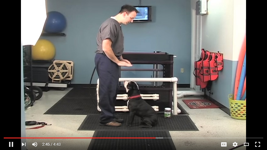 Video: Sit to Stand Excercise