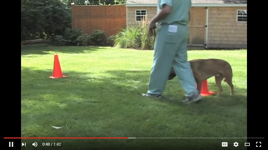 Video: Figure 8 Excercise