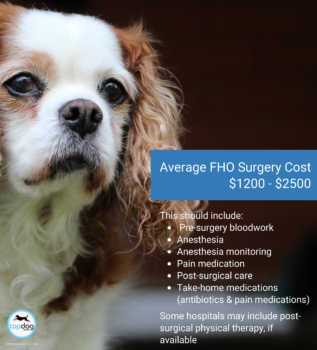 Femoral Head Osteotomy (FHO) Surgery for Dogs | Cost