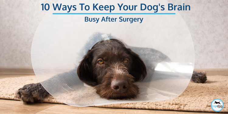 10 Ways to Keep Your Dog's Brain Busy After Surgery
