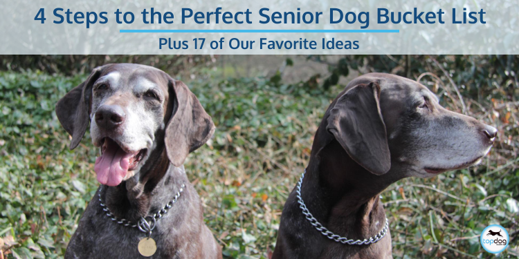 4 Steps to the Perfect Senior Dog Bucket List Plus 17 of Our Favorite Ideas